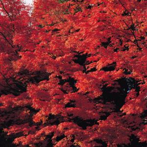○○の秋といえば…… 「食欲の秋」がダントツで一位に じゃあこの秋食べたいのは?