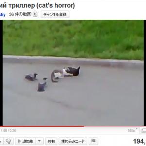 カラスvs.猫vs.猫