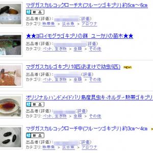 『Yahoo!オークション』でゴキブリが販売されていると話題に
