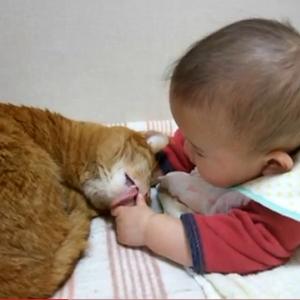 凄い癒される猫と赤ちゃんコンビの動画 赤ちゃんの指をペロペロ(^ω^)