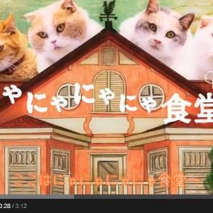 出演者は本物のネコのみ『にゃにゃにゃにゃ食堂』 阿澄佳奈ら人気声優のネコ語で熱演がすごい