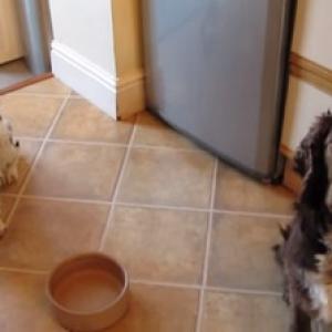 【動物動画】大量のヨダレをたらす犬