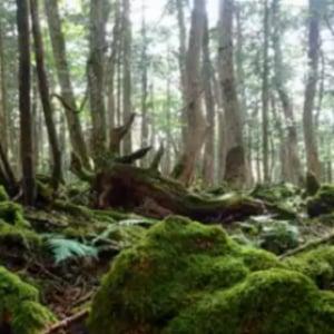風来坊の力也『一緒に日本を旅しよう』博多から新宿まで1200kmヒッチハイクの旅  10日目