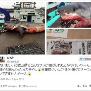 三重県御浜町で揚げられたサメがガチでヤバイ・・・
