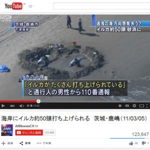 3.11の一週間前にも!? 茨城県の海岸にイルカが大量に打ち上げられたニュースが話題に