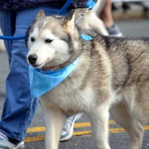 飼い犬は見つめられると安心ホルモンが増加する?