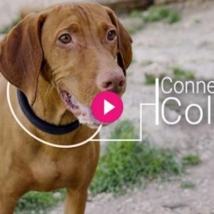 何でもスマート化すりゃいいってもんじゃないよ!(笑) 犬の首輪『The First All-In-One Smart Dog Collar』