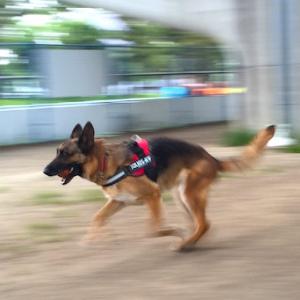 【犬】運動なしに躾はできない