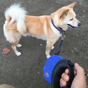 【犬】収縮リードの使いかたと危険性