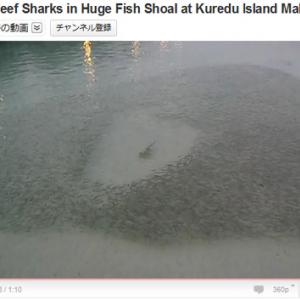 巨大魚から一定の距離を保って逃げる小魚たちの群れ